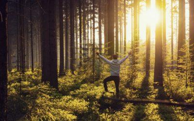 Waldbaden Ausbildung 2019: Zertifizierter Waldbademeister