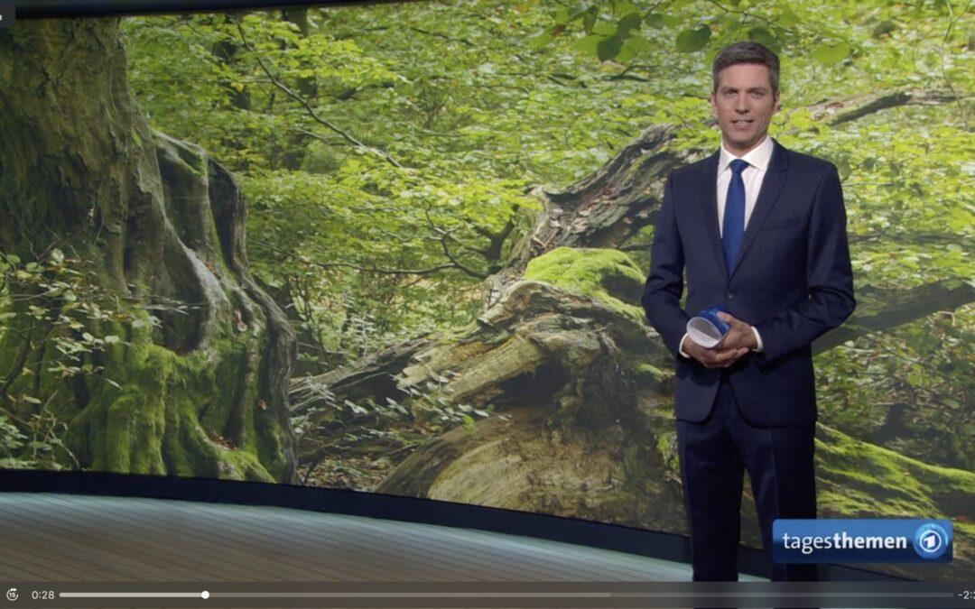 Waldbademeister Ausbildung: Die ARD Tagesthemen berichten
